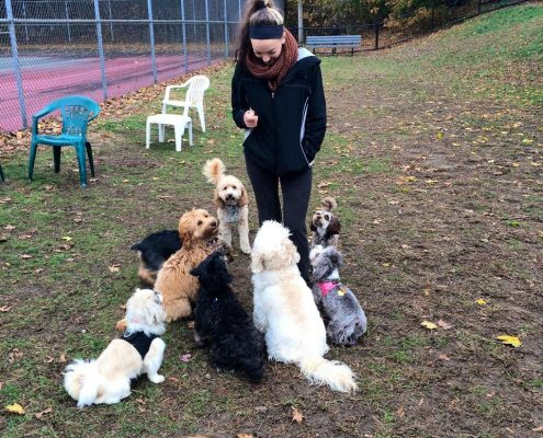 Megan training our small dog group